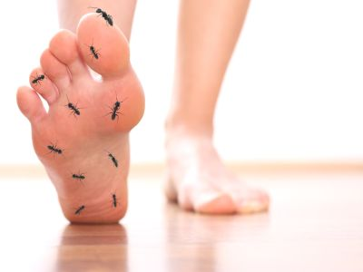 Füße mit Ameisen