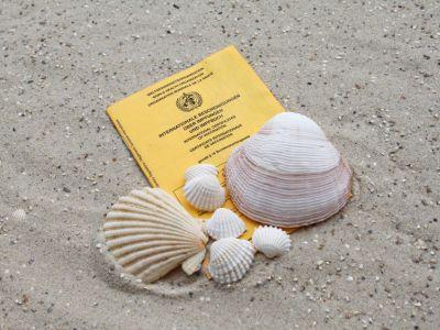 Sandboden, darauf liegen ein Impfpass und Muscheln.