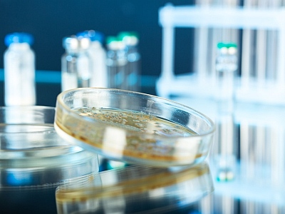 Bakterienkulturin Großaufnahme