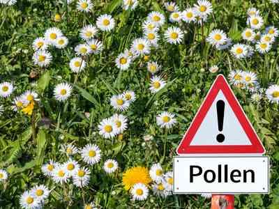 Pollenwarnschild auf Blümchenwiese.