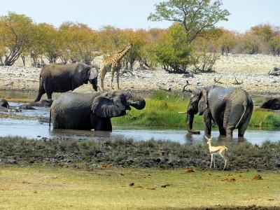 Unterwegs im unbekannten Norden von Namibia