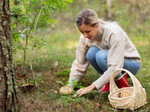 Pilzsammler brauchen Zeckenschutz